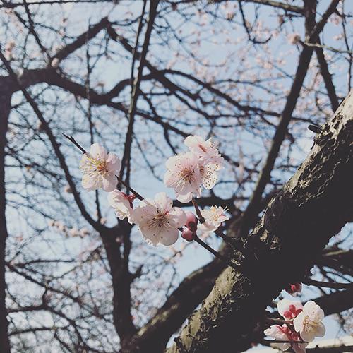 180314_ishi_01.jpg