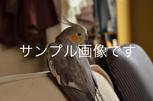 120509_oshi_01.jpg